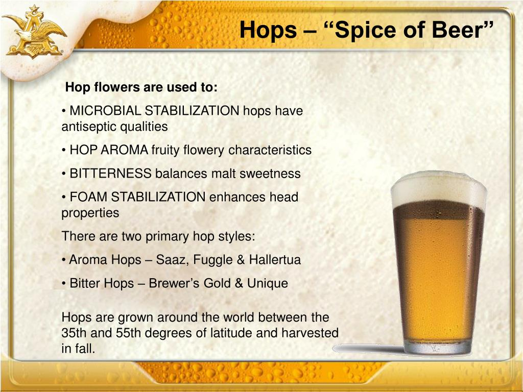 "Hops – ""Spice of Beer"""