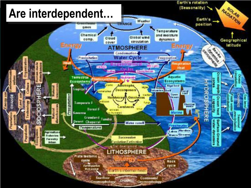 Are interdependent…