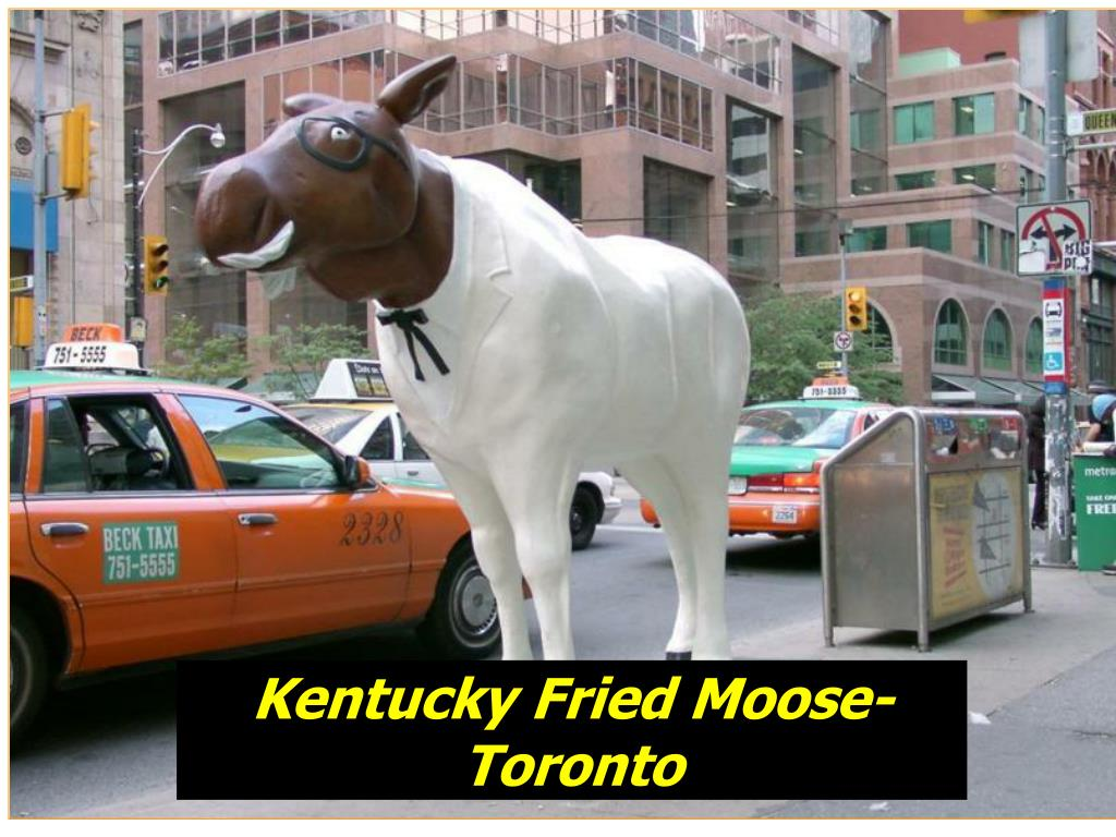 Kentucky Fried Moose-Toronto