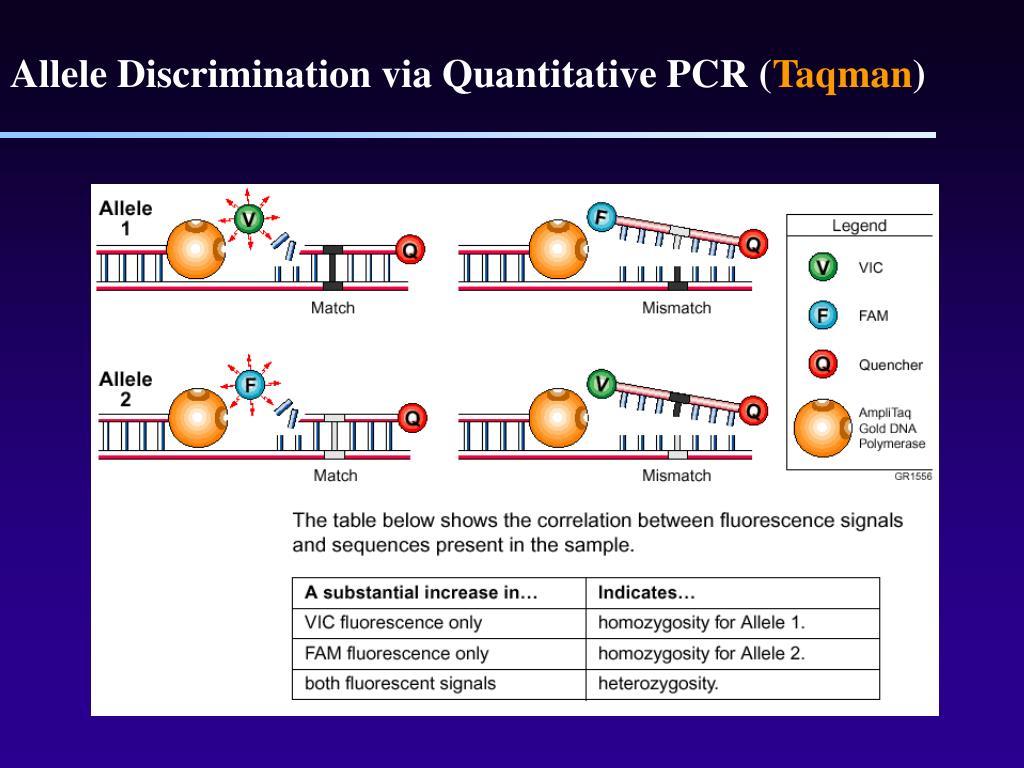 Allele Discrimination via Quantitative PCR (