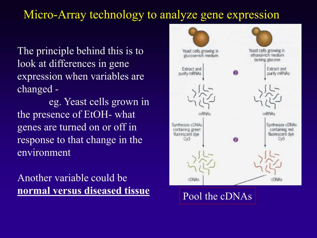 Micro-Array technology to analyze gene expression