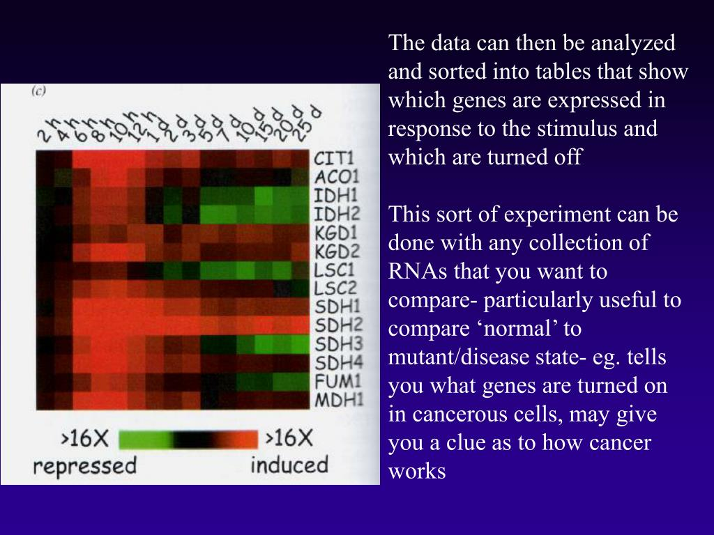 The data can then be analyzed and sorted into tables that show which genes are expressed in response to the stimulus and which are turned off