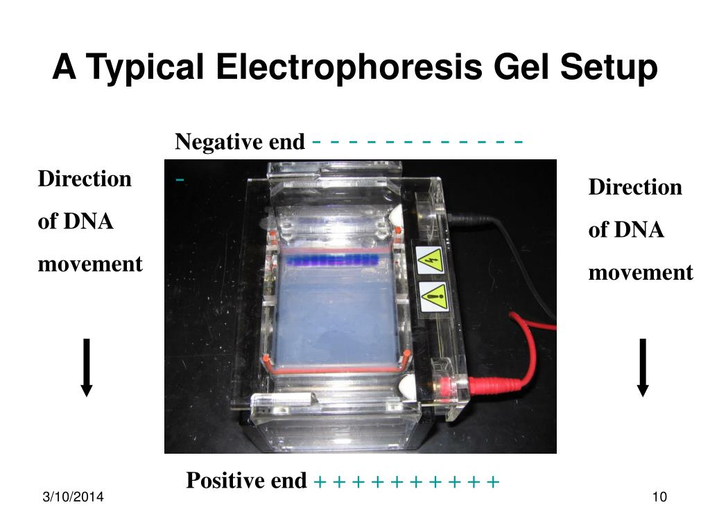 A Typical Electrophoresis Gel Setup