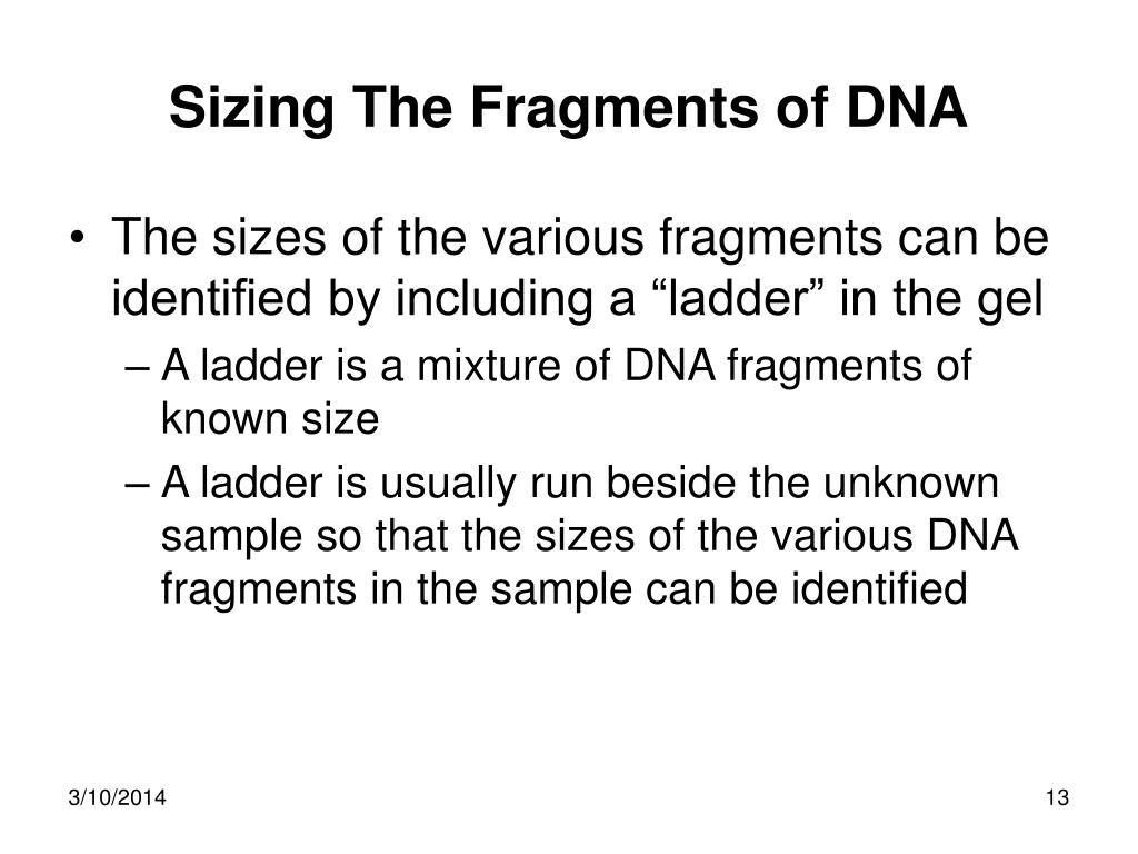 Sizing The Fragments of DNA