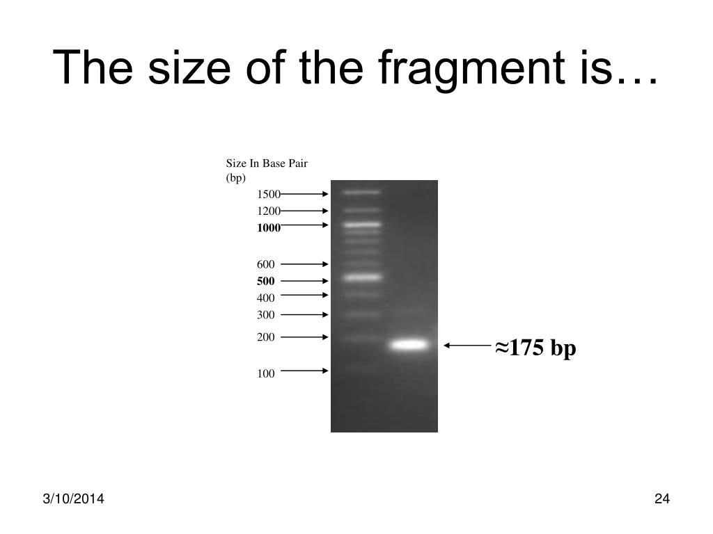The size of the fragment is…
