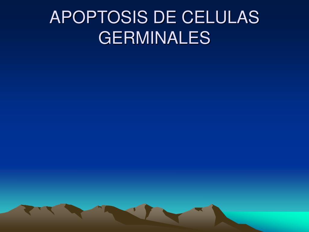 APOPTOSIS DE CELULAS GERMINALES