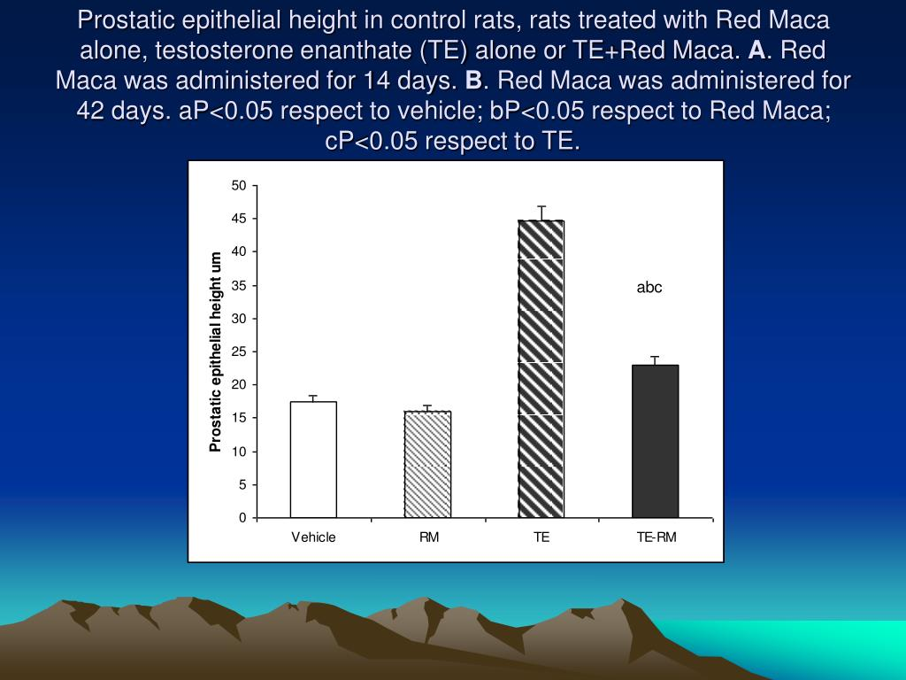 Prostatic epithelial height in control rats, rats treated with Red Maca alone, testosterone enanthate (TE) alone or TE+Red Maca.