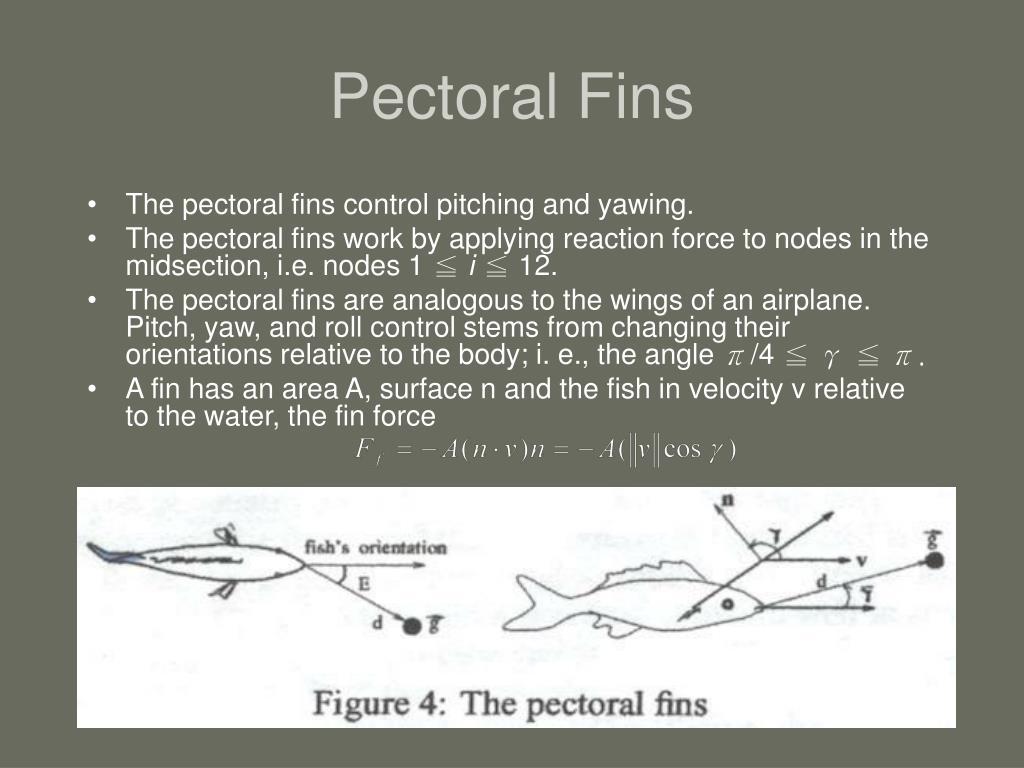 Pectoral Fins