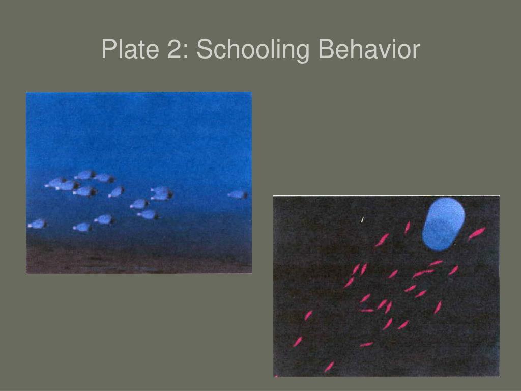 Plate 2: Schooling Behavior