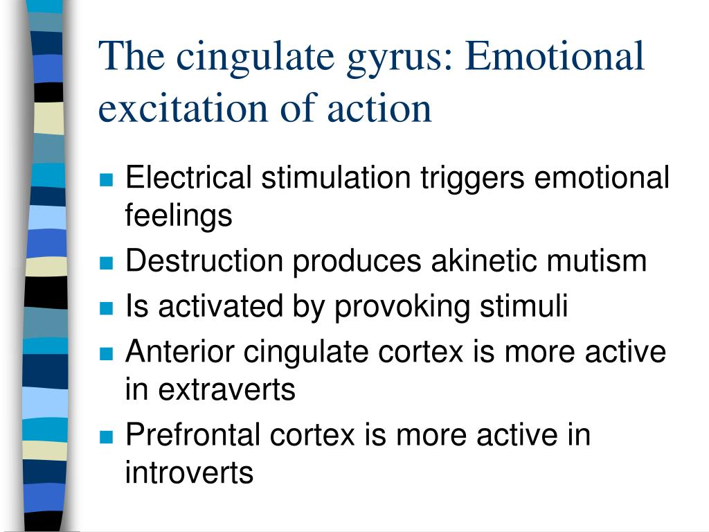 The cingulate gyrus: Emotional excitation of action