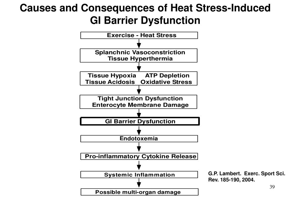 Causes and Consequences of Heat Stress-Induced