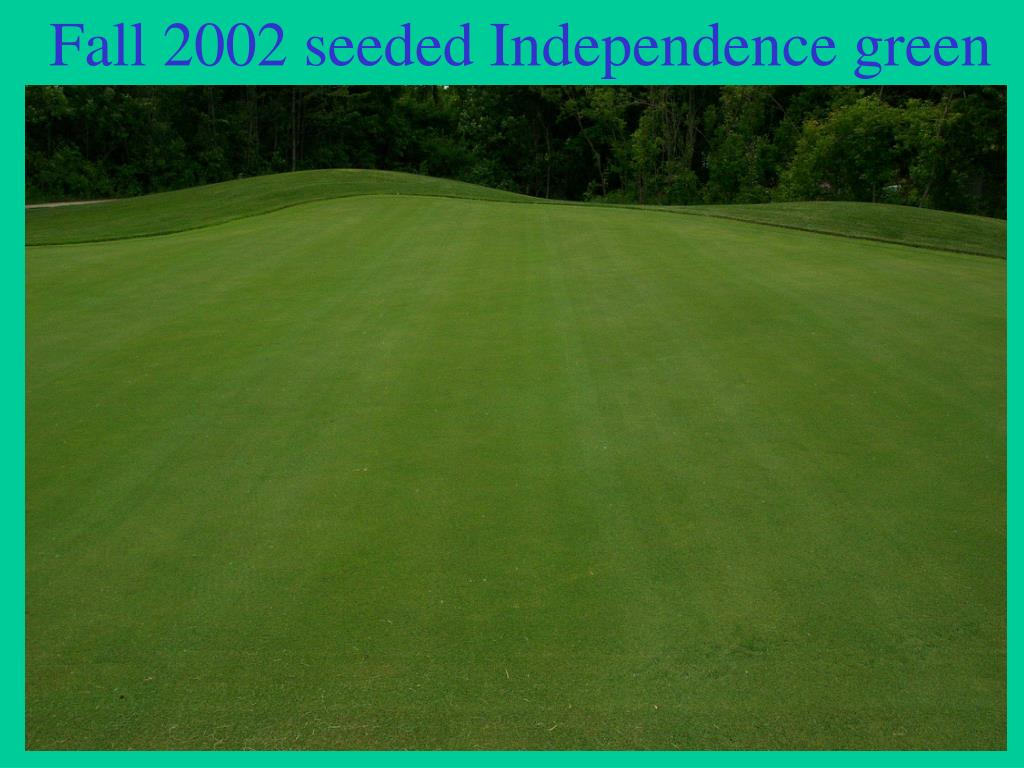 Fall 2002 seeded Independence green