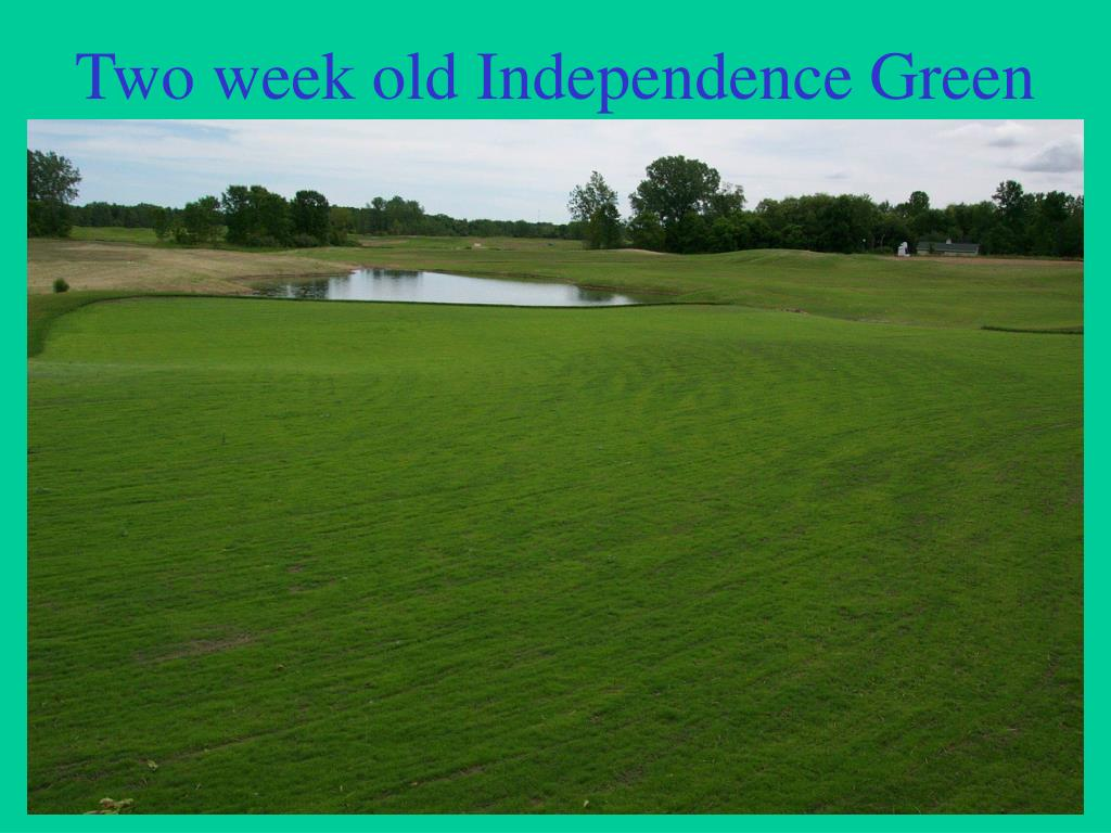 Two week old Independence Green