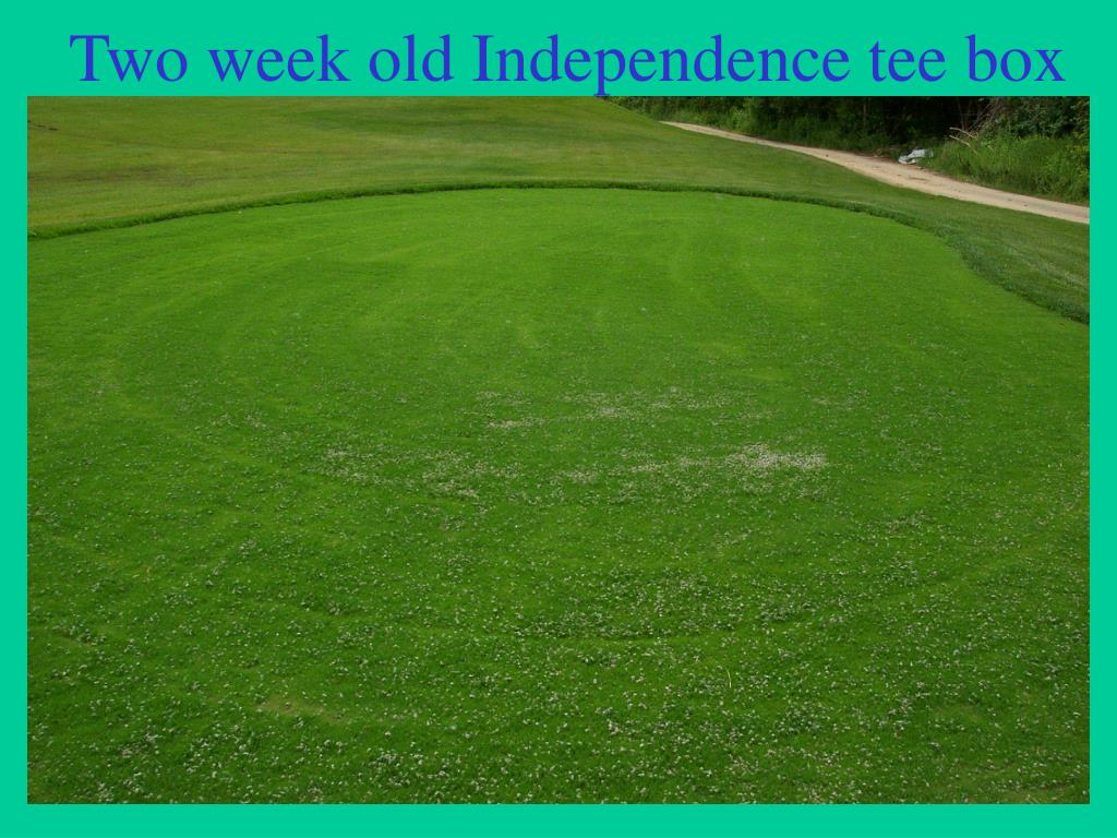 Two week old Independence tee box