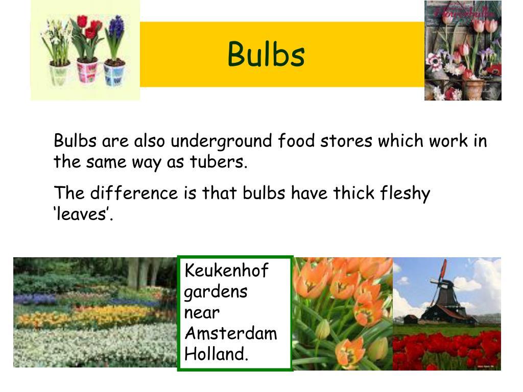 Keukenhof gardens near Amsterdam Holland.