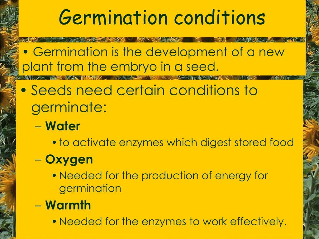 Germination conditions