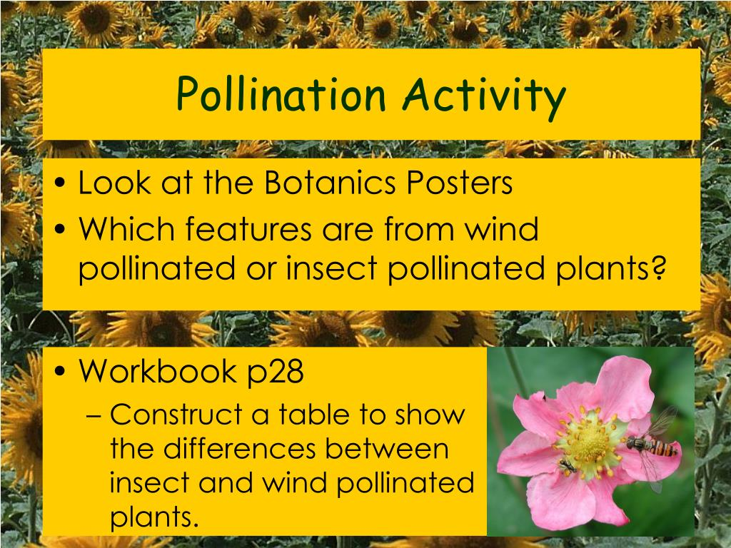 Pollination Activity