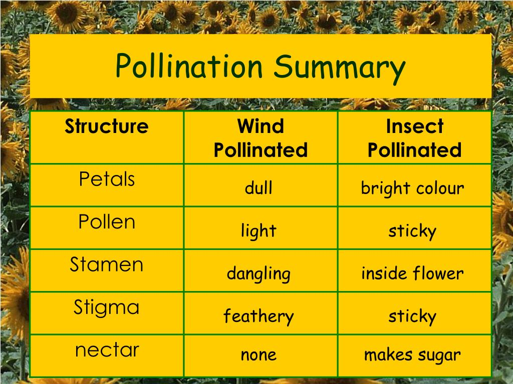 Pollination Summary