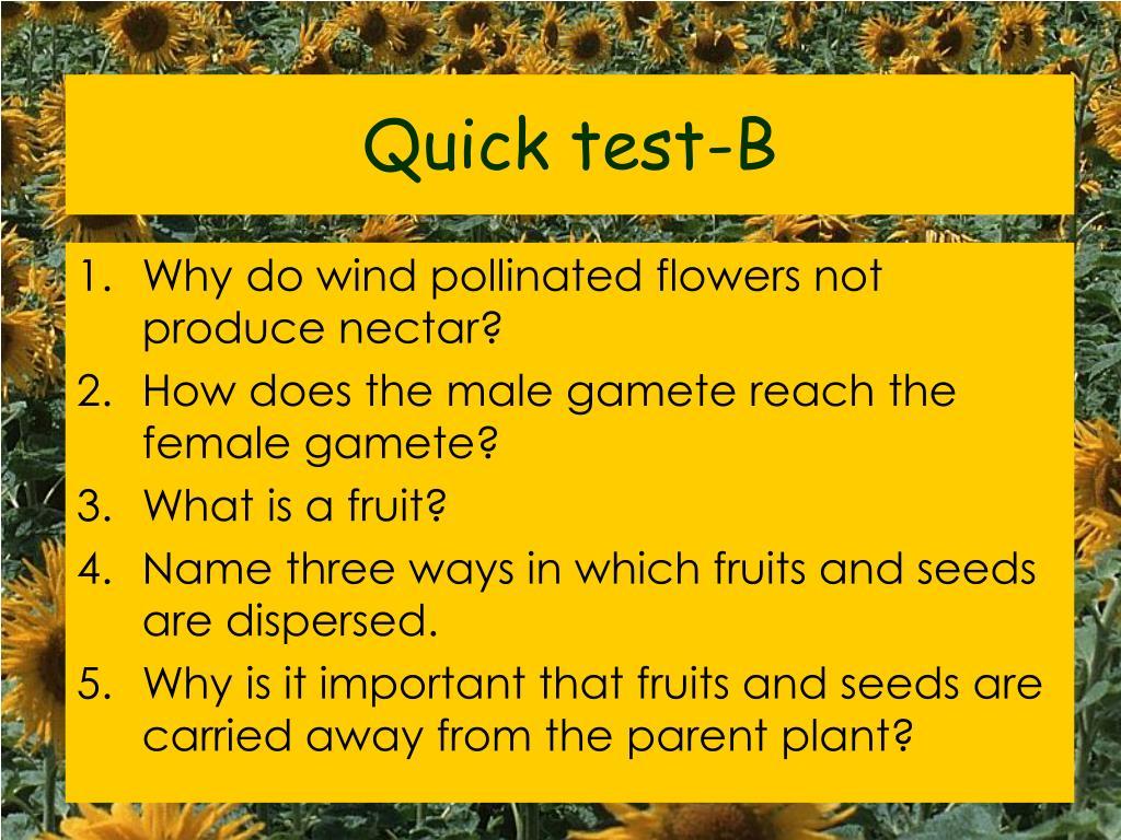 Quick test-B