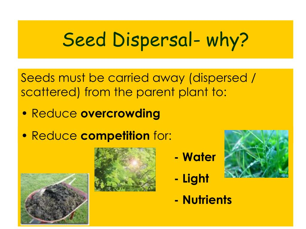 Seed Dispersal- why?