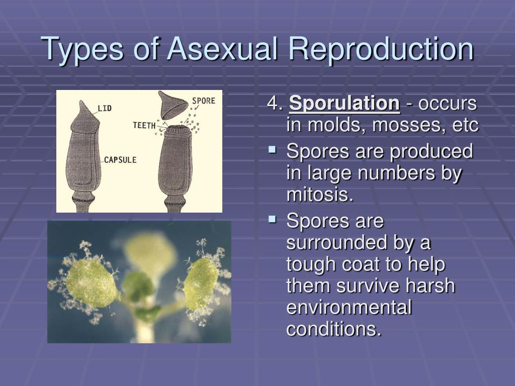 Per 3 Sexual & Asexual Reproduction - ProProfs Quiz
