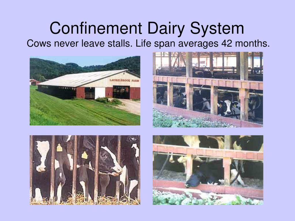 Confinement Dairy System