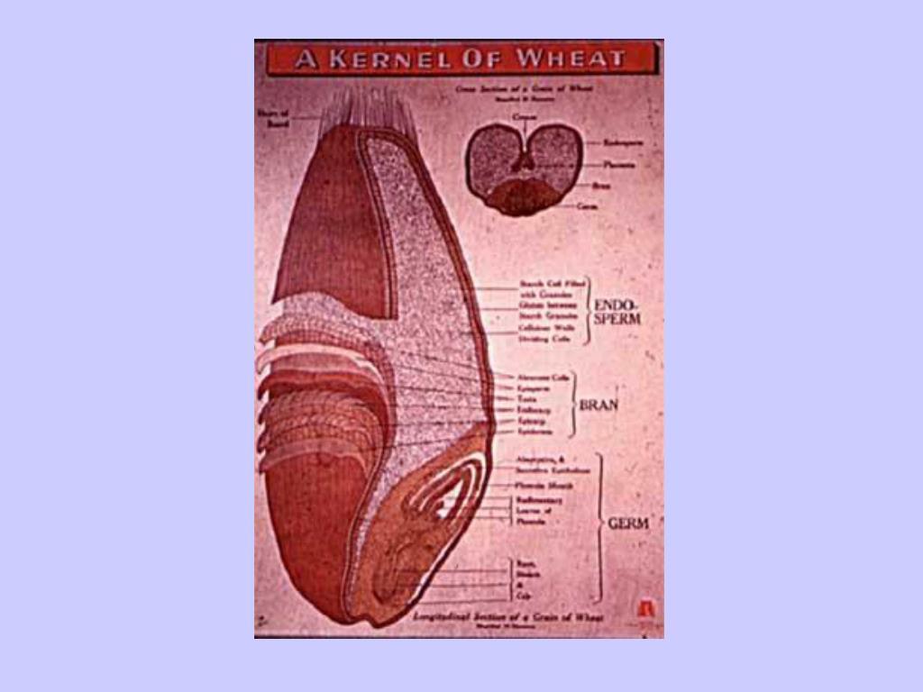 Grain diagram