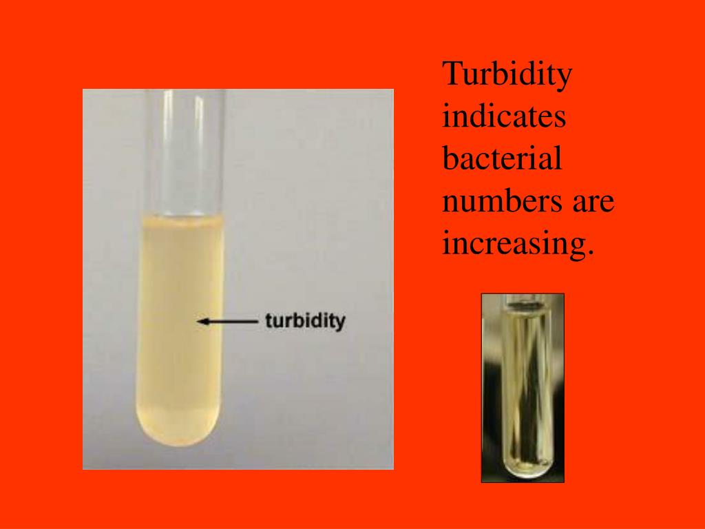 Turbidity indicates bacterial numbers are increasing.