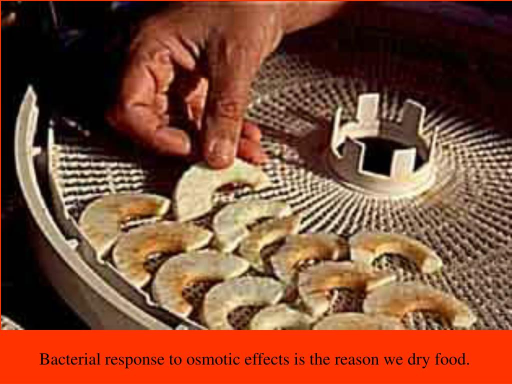 Bacterial response to osmotic effects is the reason we dry food.