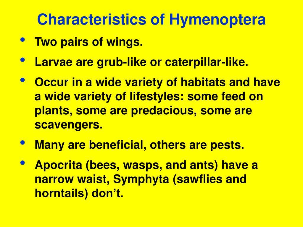 Characteristics of Hymenoptera