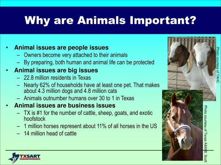 Why are animals important