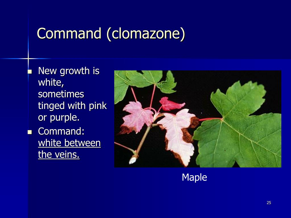 Command (clomazone)
