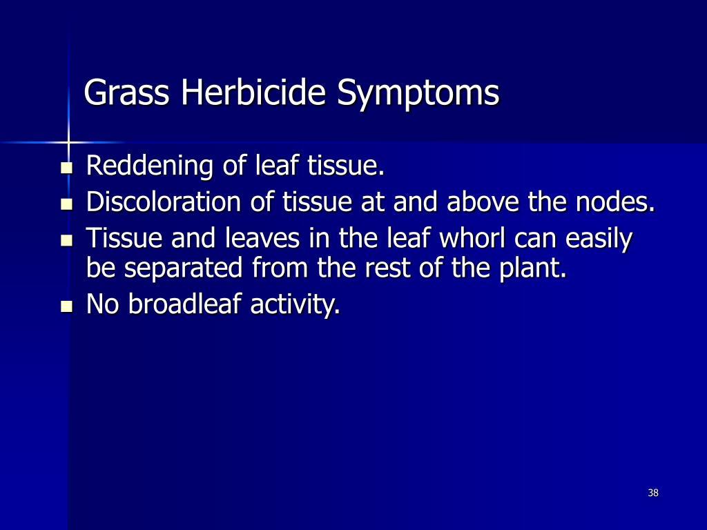 Grass Herbicide Symptoms