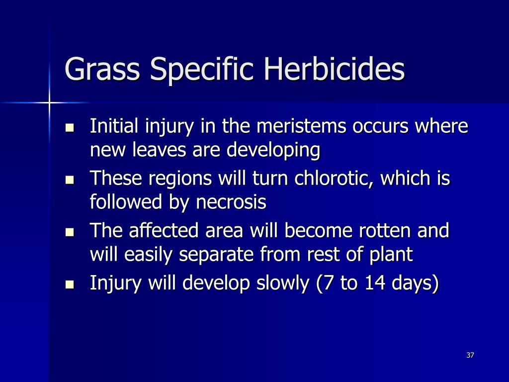 Grass Specific Herbicides