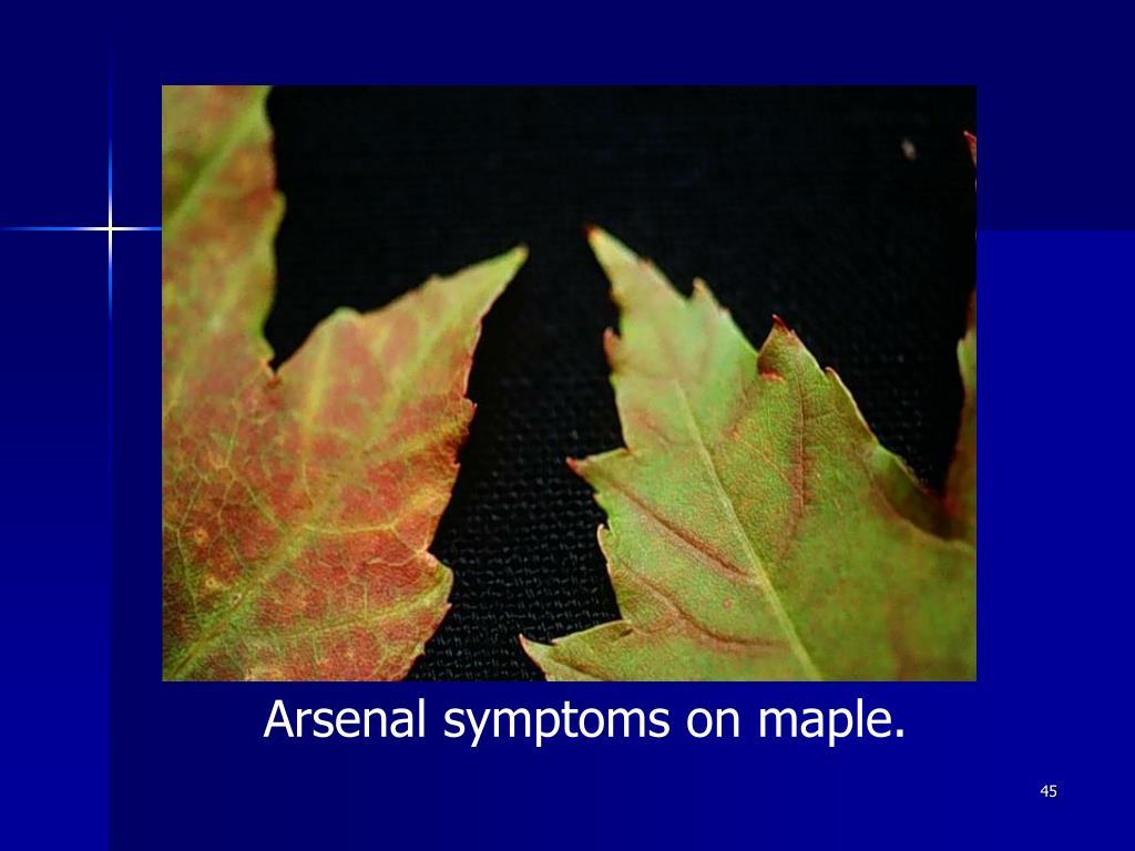 Arsenal symptoms on maple.