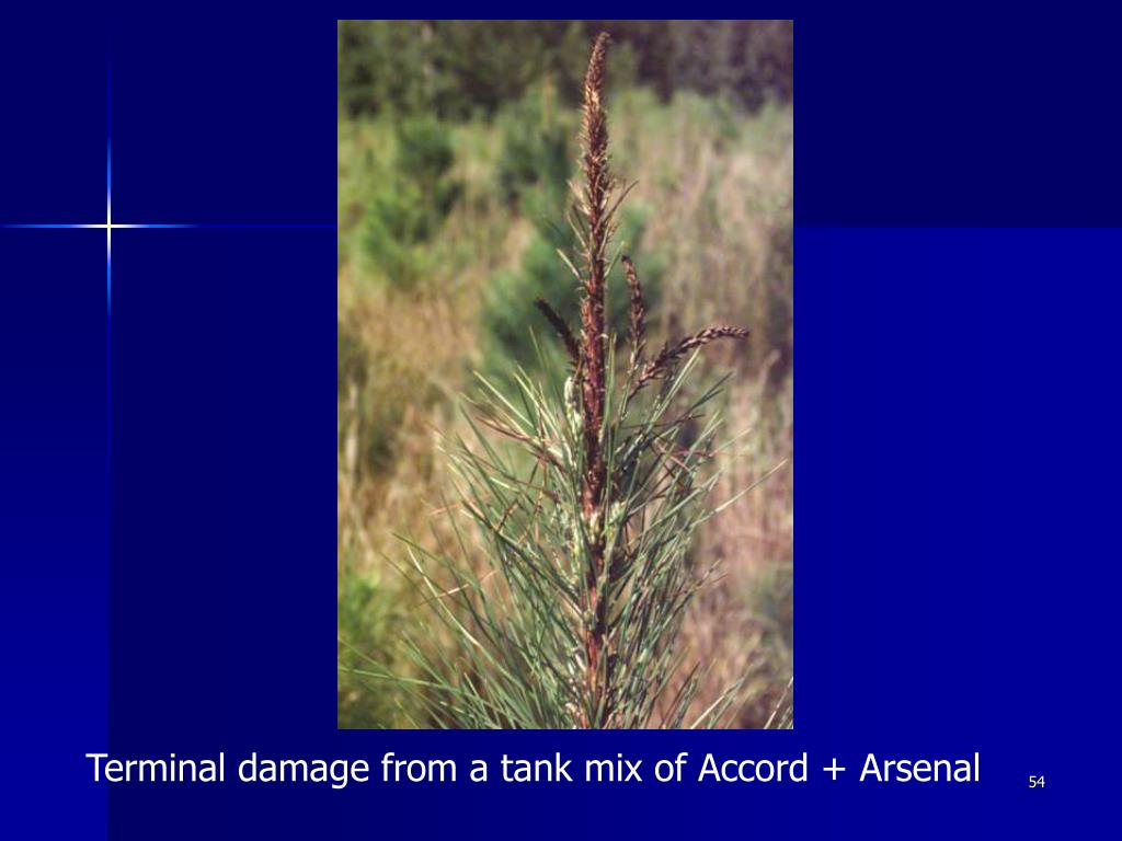 Terminal damage from a tank mix of Accord + Arsenal