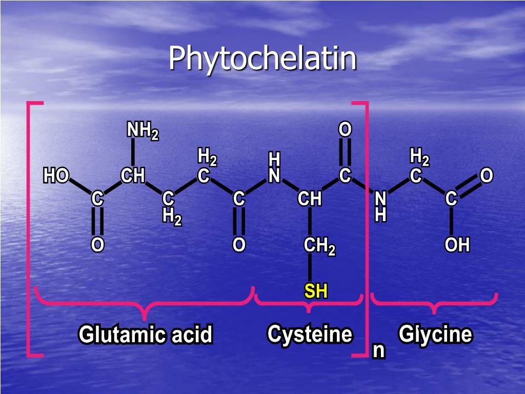 Phytochelatin