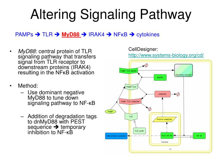 Altering Signaling Pathway