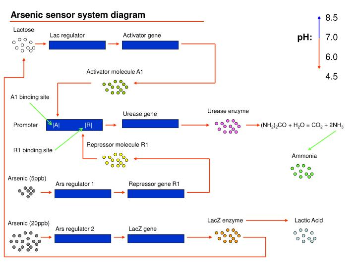 Arsenic sensor system diagram