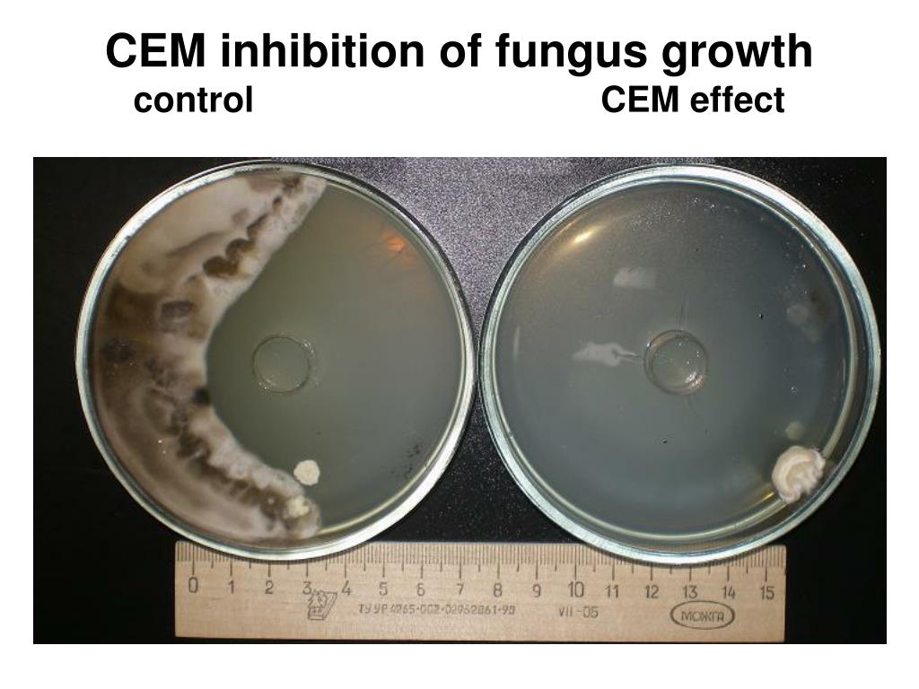 CEM inhibition of fungus growth