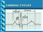 cardiac cycles