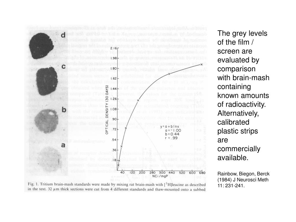 The grey levels of the film / screen are evaluated by comparison with brain-mash containing known amounts of radioactivity. Alternatively, calibrated plastic strips are commercially available.
