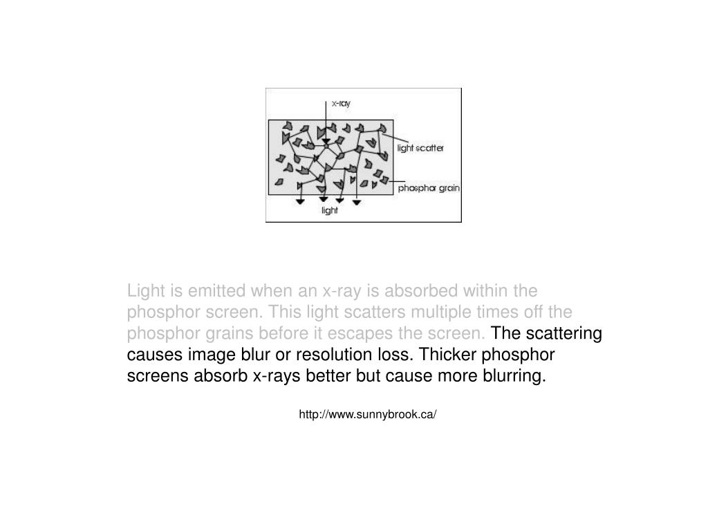 Light is emitted when an x-ray is absorbed within the phosphor screen. This light scatters multiple times off the phosphor grains before it escapes the screen.