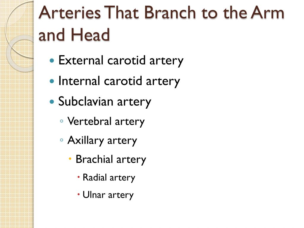 Arteries That Branch to the Arm and Head