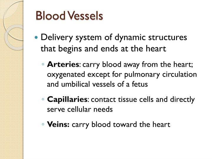 Blood vessels l.jpg
