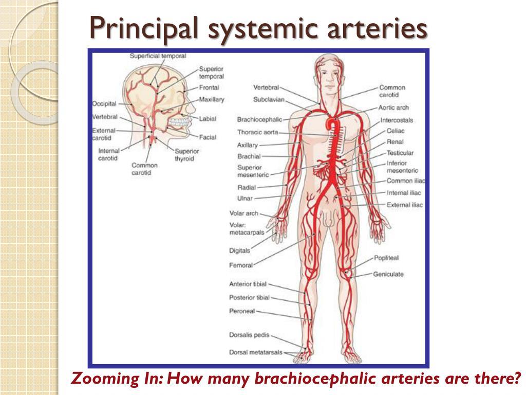 Principal systemic