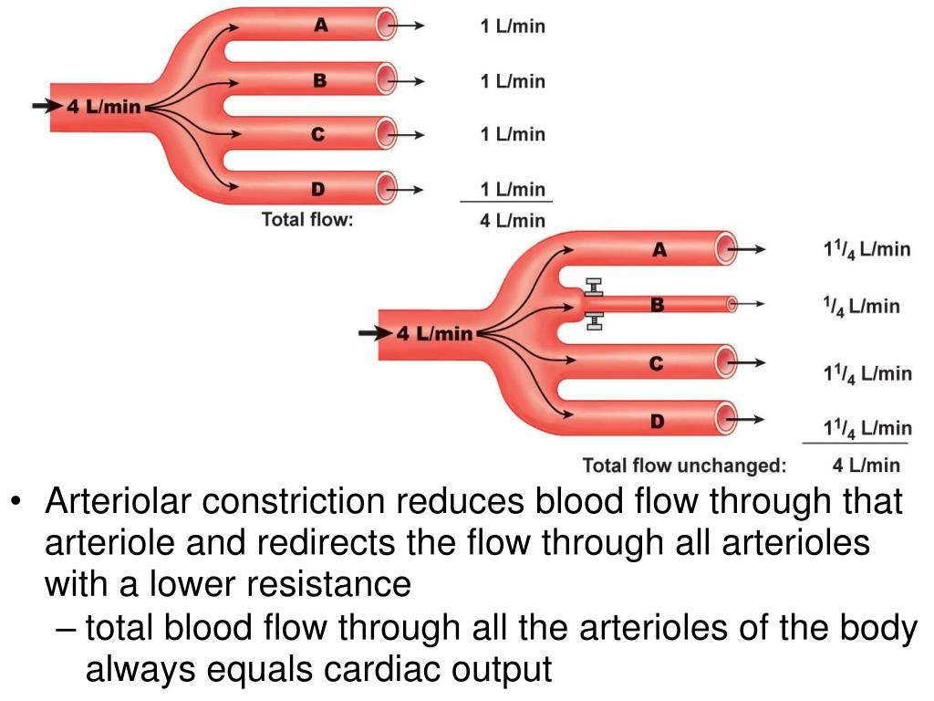 Arteriolar constriction reduces blood flow through that arteriole and redirects the flow through all arterioles with a lower resistance