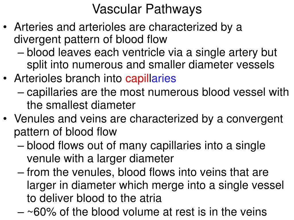 Vascular Pathways