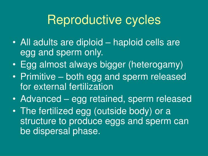 Reproductive cycles l.jpg