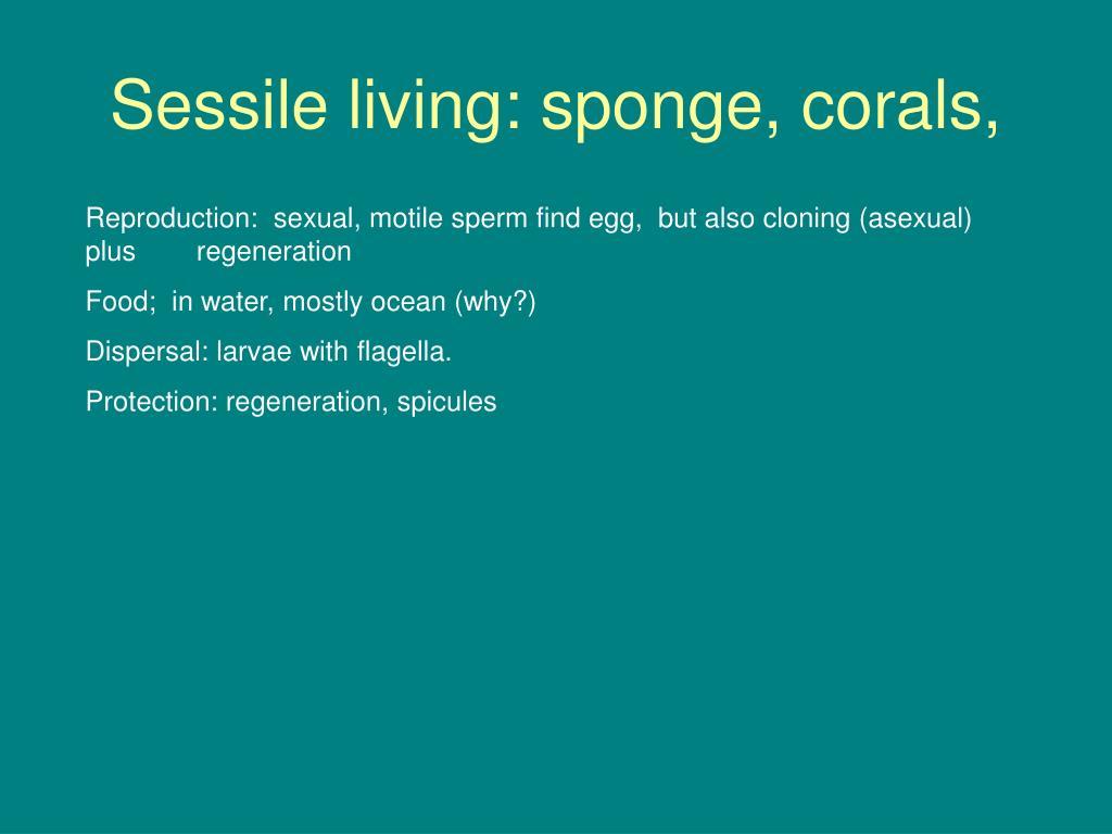 Sessile living: sponge, corals,